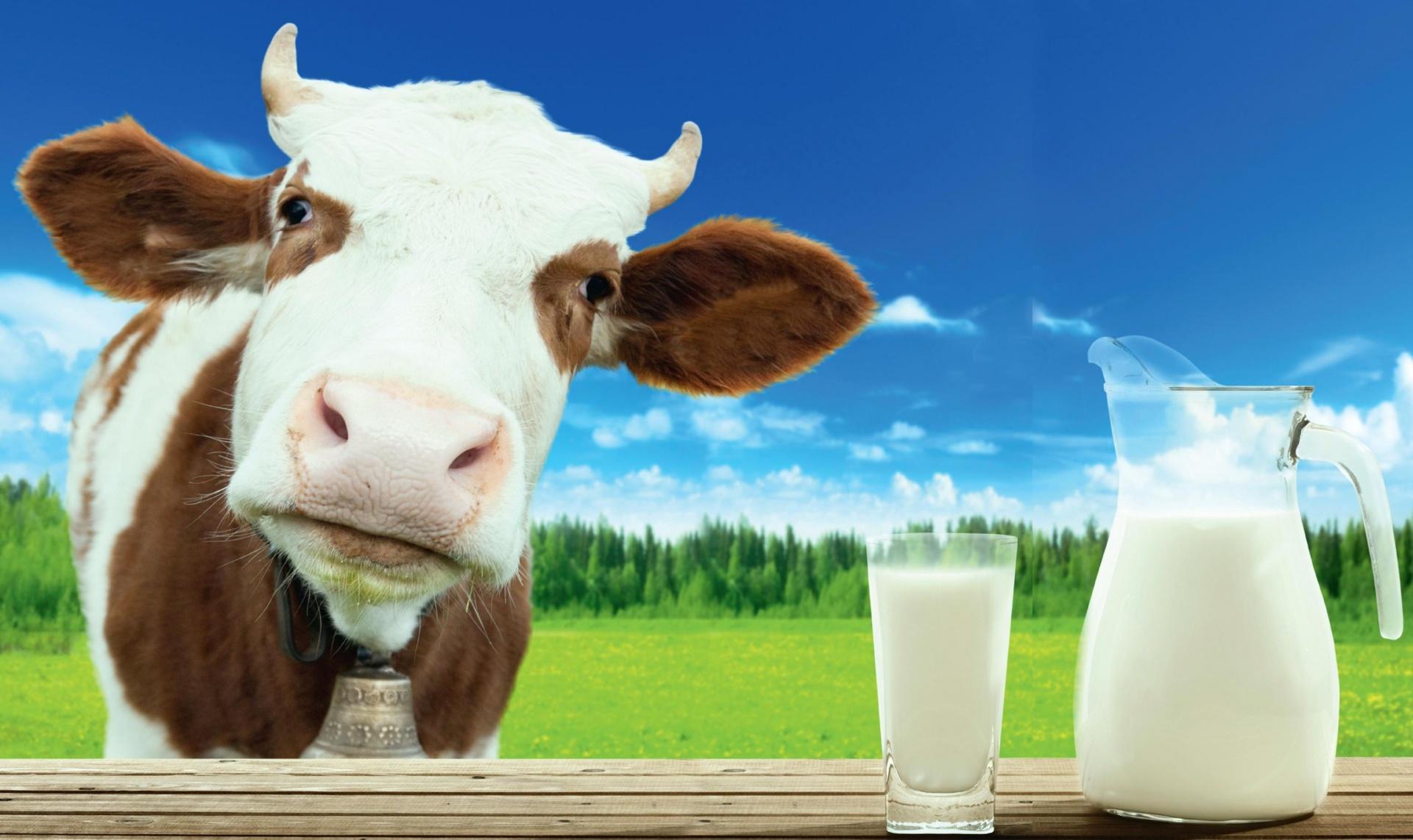 В Осташкове продавали поддельное молоко