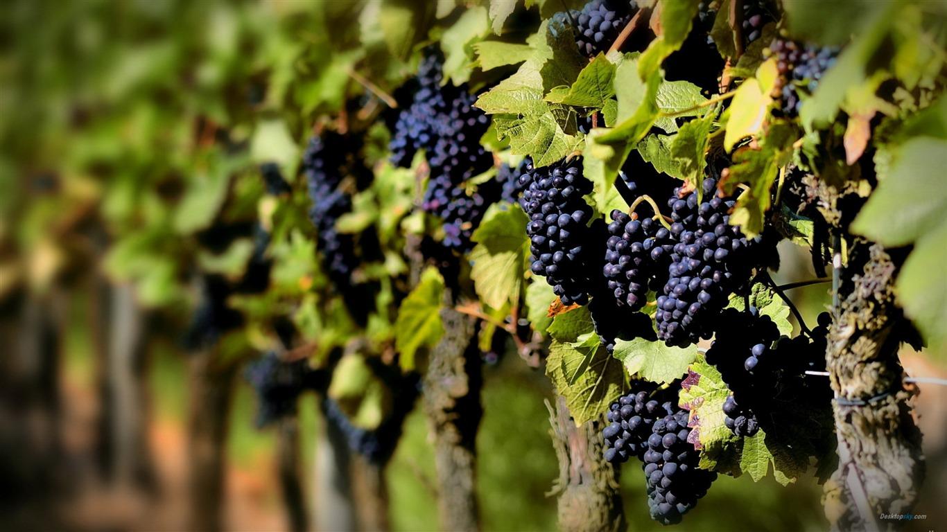 Какие сорта винограда лучше сажать на алтае 82